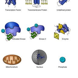 Cellular Components and Proteins